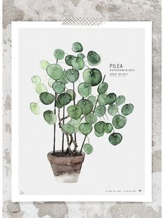 Pilea Print (40x50cm) by My Deer