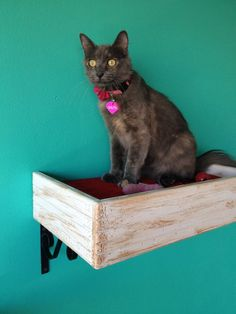 Set of 3 Two Reclaimed Wood Cat Shelves and One by PorteSueloGoods