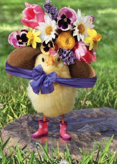Baby Chick Big Bonnet - Avanti Easter Card - Greeting Card by Avanti Press in Home & Garden, Greeting Cards & Party Supply, Greeting Cards & Invitations Cute Funny Animals, Cute Baby Animals, Cute Ducklings, Bird Netting, Easter Wallpaper, Baby Chickens, Tier Fotos, All Things Cute, Cute Animal Pictures