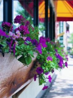 Brighten windows with a container full of petunias.