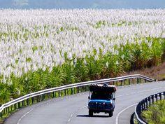 Culinary Travel: Mauritius - L'aventure du Sucre (The Adventure of Sugar)