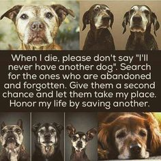 Honor my life by saving another. Will never take your place but will surely be loved ♥