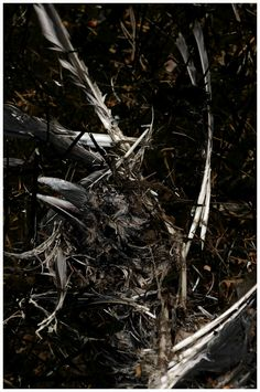 Crow - Disassembled Crow, Photography, Raven, Photograph, Fotografie, Crows, Photoshoot, Fotografia