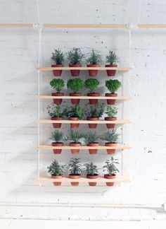 DIY hanging herb garden via Ryobi Nation