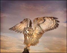 'The Eagle Owl Has landed' by Mike Sherman{woodmanIroc} in England