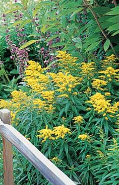 Deer and Drought resistant plants from Birds and Blooms magazine.