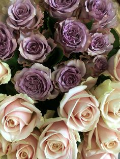 Dolcetto & Sweet Avalanche roses