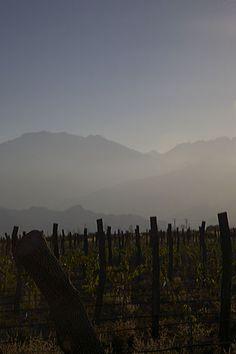Vineyard, Mendoza, Argentina.