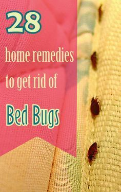 Killing bed bugs in books
