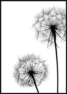 Dandelion no1 Poster in der Gruppe Poster / Größen und Formate / 50x70cm bei Desenio AB (2392)
