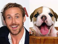 """It's hard to be on Pinterest without coming across this face.  Ryan Gosling has become the face of Social Memes across various platforms. Via """"Is Ryan Gosling Cuter than a Puppy?"""""""