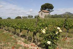 Domaine du rosier #vin #wine