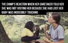 After reading this story you will understand how motherhood and loss are universal. Washoe, an exceptionally smart chimpanzee who knew sign language, was not happy with her caretaker Kat, who hadn't visited for some time. …