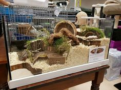 - You can find Hamster cages and more on our website. Habitat Du Hamster, Hamster Life, Hamster Stuff, Hamster Homes, Big Hamster Cages, Gerbil Cages, Animal Room, Animal House, Hamster Tank