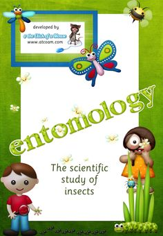 80+ pages  Entomology theme: ants, bugs, stick insects, butterflys, dragonflys, moths, cockroaches, crickets, grasshoppers, sliverfish and more.  Posters, colouring pages, investigation, exploration, blackline masters, songs, frieze, craft ideas, online links to videos and interactives, muliple examples covering a variety of insects and more.  http://www.teacherspayteachers.com/Product/INSECTS-entomology-the-scientific-study-of-insects