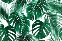 Bay Isle Home Bannock Removable Tropical Palm Leaves L x W Peel and Stick Wallpaper Roll Wallpapers Macbook, Macbook Wallpaper, Computer Wallpaper, Wallpaper Roll, Leaves Wallpaper, Wallpapers For Laptop, Mac Wallpaper Desktop, Cute Laptop Wallpaper, Drawing Wallpaper