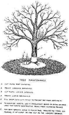 Care for fruit trees