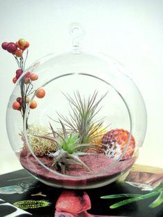 Terrarium with tillandsia (air) plants and pink sand Air Plant Terrarium, Garden Terrarium, Succulents Garden, Garden Plants, Planting Flowers, Air Plants, Indoor Plants, Low Maintenance Plants, Cactus Y Suculentas