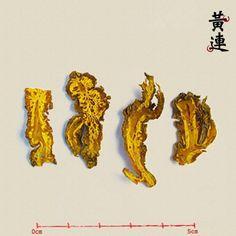 【黃連】性味歸經:苦,寒。歸心、肝、胃、大腸經。功效:清熱燥濕,瀉火解毒。