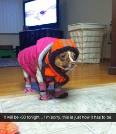 This ready-for-winter dog.   29 Dogs You Won't Believe Actually Exist