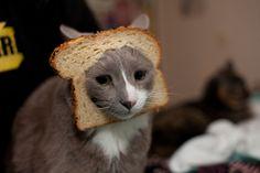 Cat Breading!