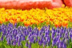 Достаточно крохотного зернышка надежды, чтобы засеять целое поле счастья...  Марк Леви http://www.newera-group.net/