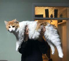 """281 Beğenme, 1 Yorum - Instagram'da Kedi Şeysi (@kedilikmuessesesi): """"Kedi gibi kedi #nofilter #yeskedi 😎 #cat #catlovers #catsagram #instacat #catsofinstagram #kedi…"""""""