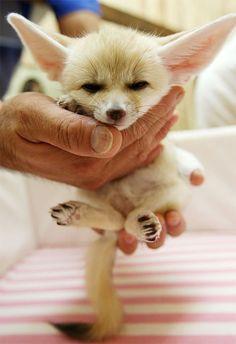Baby fox :) he looks kinda angry