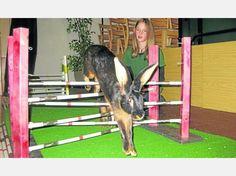 Artgerechter Sport für Kaninchen: Beim Kaninhop, wie ihn Sandra Piontek demonstriert, springen die Tiere über verschiedene Hindernisse. Fotos:Slawik