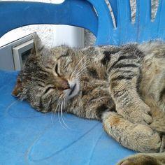 Il riposo del Guerriero ;-)  Dolci Sogni a-mici anche da #Bigio ♡  #Buonanotte !   #Goodnight #Sleeptime #sleep #catsofinstagram #cats #instacat #cutecats #sweetcats #lovelovelove #lovecat @animals_captures #animal_captures @_RSA_Nature #RSA_nature #cats #pets #animals #photooftheday #ilovemycat #nature #catoftheday #lovecats   #catsmylove #gatti #dolcigatti #dolcicuccioli #ioamoglianimali #MIAO :-)