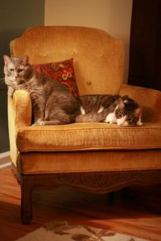 kitties in a big comfy chair