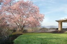A beautiful cherry tree admires the mountain view on the South Terrace of #Biltmore House the week of April 10, 2013. www.biltmore.com