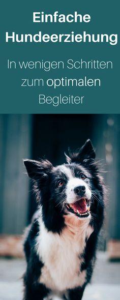 Hundeerziehung Schritt für Schritt, Hundetraining für kleine Welpen und ausgewachsene Hunde. Damit habe ich es geschafft, dass mir mein Hund aufs Wort folgt. Hundetraining, Hundetraining tipps.Hundeerziehung, Hund erziehen, Kunststück Hund, Hund dressieren, Maulkorbtraining Hund #hund #hundetraining #hundgehorchen