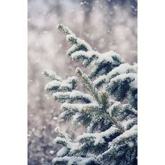 Winter ❤ liked on Polyvore featuring backgrounds, pictures, winter, image, photos and filler