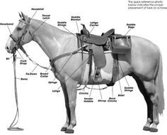 How to Tack up your Horse for Western Riding