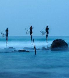 Bleu - Nature inspirante - Dans la catégorie Personnes, ce cliché de pêcheurs sur pilotis réalisé au Sri Lanka par Ulrich Lambert remporte la mention honorable. Les pêcheurs assis sur une barre transversale, sont attachés à un poteau vertical planté dans le récif corallien.   Blue - inspiring Nature (Ulrich Lambert)