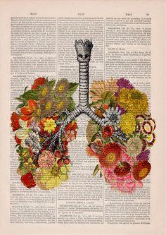 Dicionários vintages em belas e coloridas ilustrações da anatomia humana