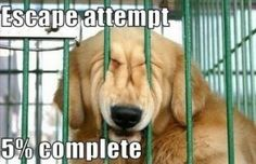 Escape Attempt 5% Complete... #dogs
