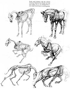 Horse skeleton from pose