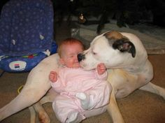Loveable Pits