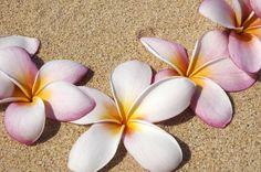 How to Make Plumeria Foam Flowers (7 Steps)