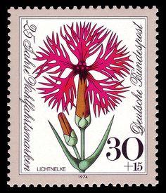 Lichtnelke-Lychnis. Series for social welfare 1974, flowers,Germany. Graphics by Heinz Schillinger