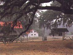 Hofwyl-Broadfield Plantation, Brunswick GA.  Off hwy 17