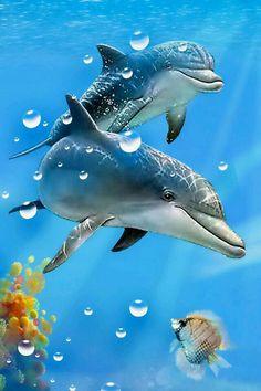 Los delfines son adorables y bonitos