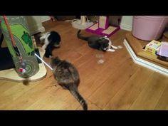 Jedi Cats - Jedi Cats Trailer - Jedi Kitten Jedi Force Lightsaber – Funn... Funny Cat Videos, Funny Cats, Youtube Cats, Right Meow, Lightsaber, Cat Gif, Kitten, Memes, Dogs