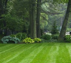 Beautiful lawn and hostas.....backyard at the edge of the woods