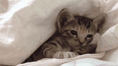 kitty cat funny animals cute funny gif sleep cats kitten animal fun funny gifs cat gif kittens sleepy kitten gif