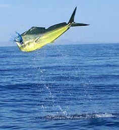 Beam me down scottie by gary luhm on 500px isla carmen for Baja california fishing