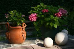 Auf Regen folgt Sonnenschein Seasons, Plants, Sunshine, Environment, Rain, Seasons Of The Year, Plant, Planets