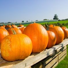 You can grow favourite Hokkaido pumpkin in your garden. If you are lucky enough and your harvest is rich, you can store pumpkins without any problem for a long time… Fall Pumpkins, Houseplants, Squash, Harvest, Gardening, Canning, Vegetables, Poultry Farming, Food